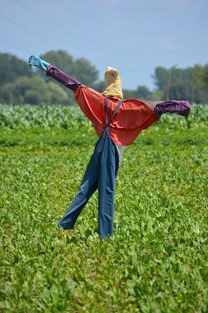 epouvantail dans un champs