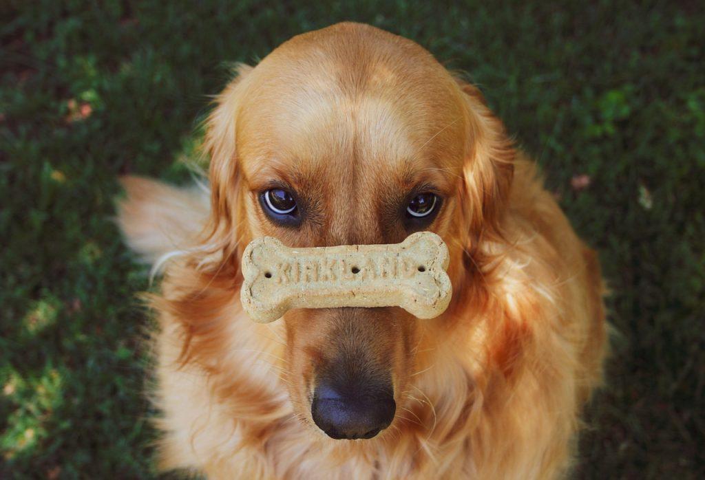 recette biscuit pour chien